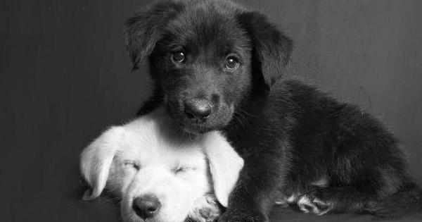 Os Sinais Clássicos do Amor Canino