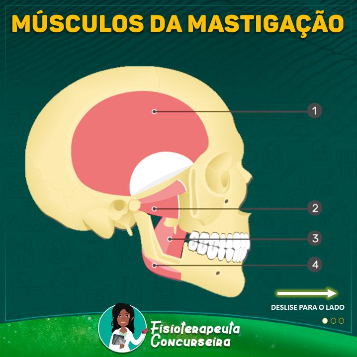 Mapa Mental dos Músculos da Mastigação | Fisioterapia
