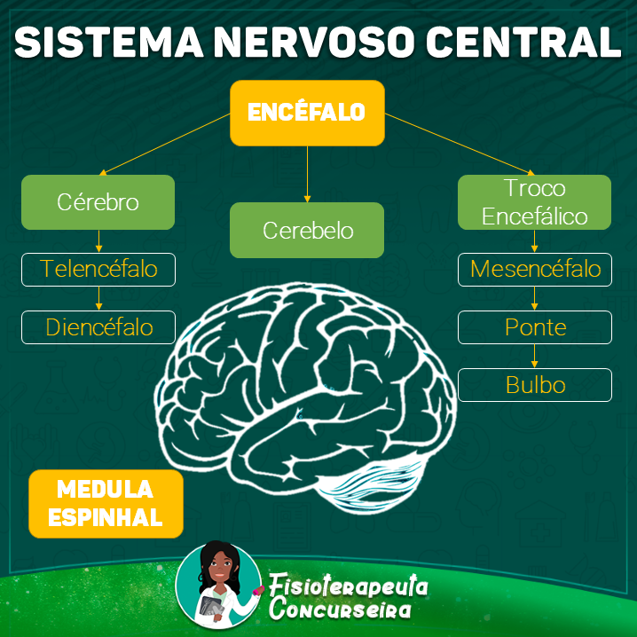 Mapa Mental do Sistema Nervoso | Fisioterapia