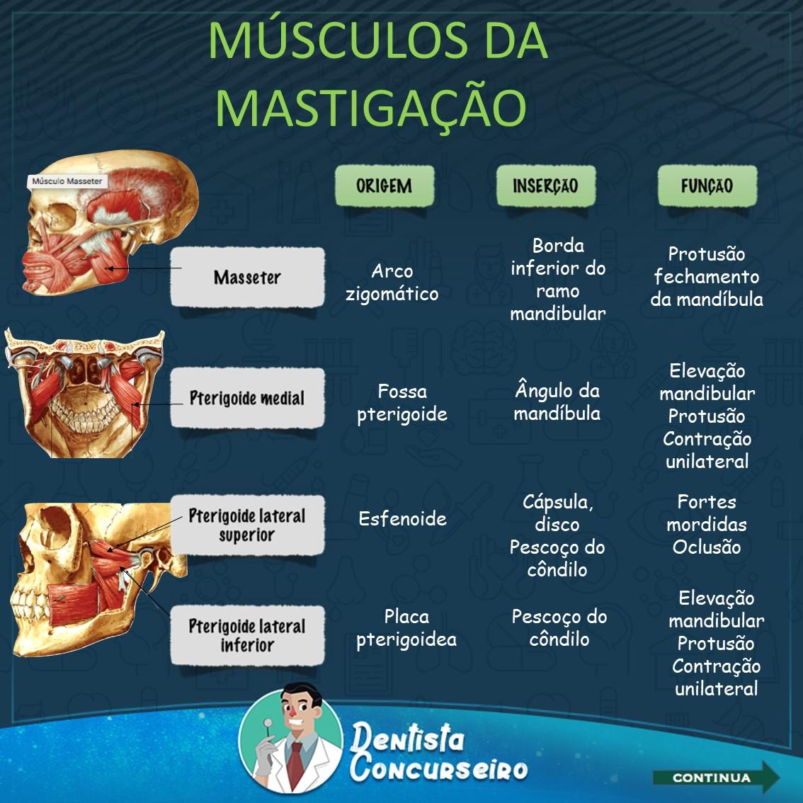 Resumos dos Músculos da Mastigação | Odontologia