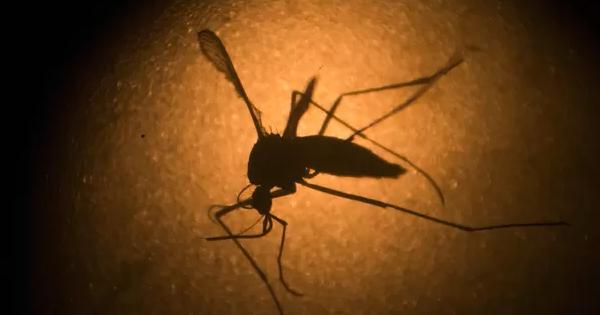 O que é o Mayaro, vírus que pode estar se espalhando pelo continente e preocupa cientistas