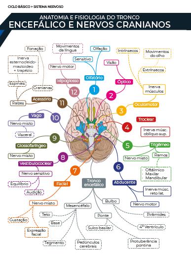 Mapa Mental - Livro.png (88 KB)
