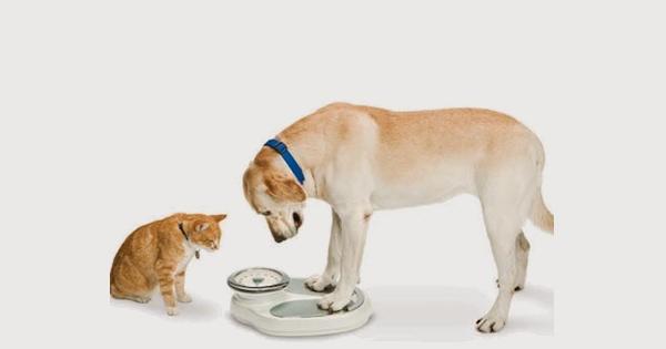 Obesidade, um problemão entre cães e gatos