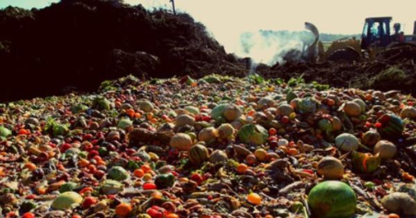 Onde não há desperdício não há fome!