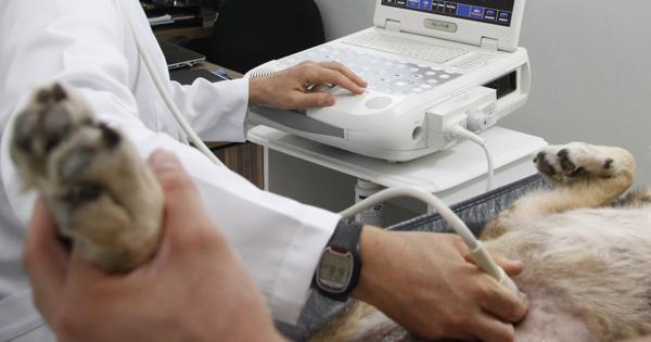Exame ultrassonográfico auxiliando no diagnóstico de câncer de mama em pequenos animais